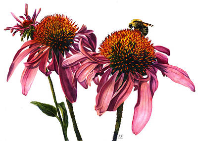 Wall Art - Painting - Coneflower W/ Bee by Kristina Spitzner