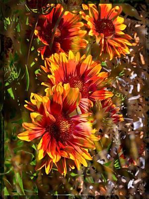 Photograph - Echinacea by Thom Zehrfeld