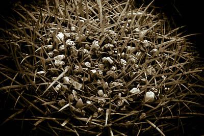 Photograph - Echinocactus Grusonii by Frank Tschakert