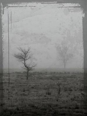 Photograph - Echo by Nadine Berg