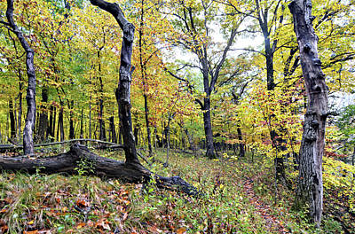 Photograph - Echo Valley Woods by Bonfire Photography