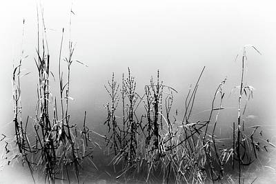 Photograph - Echoes Of Reeds 2 by Karen Stahlros