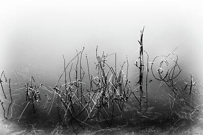 Photograph - Echoes Of Reeds 3 by Karen Stahlros