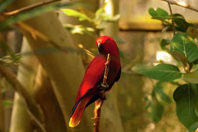 Digital Art - Eclectus Parrot Digital Oil Painting by Chris Flees