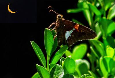 Photograph - Eclipse And Moth by Paul Wilford