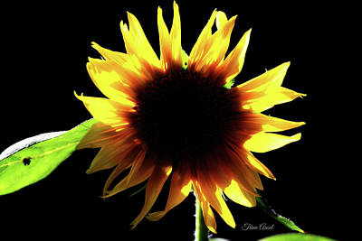 Digital Art - Eclipse Of The Sunflower by Trina Ansel