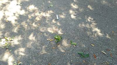 Photograph - Solar Eclipse 2017 Shadows On The Street In New Orleans by Michael Hoard