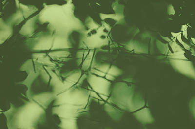 Photograph - Eclipsed Sunlight Through Vegetation by Carla Parris