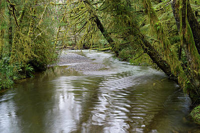 Photograph - Ecola Creek by Robert Potts