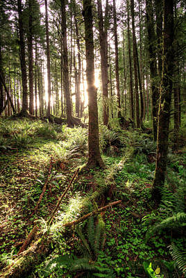 Photograph - Ecola Point Forest by Patrick Groleau