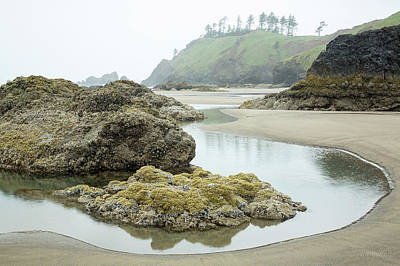 Photograph - Ecola Tidepool by Tim Newton