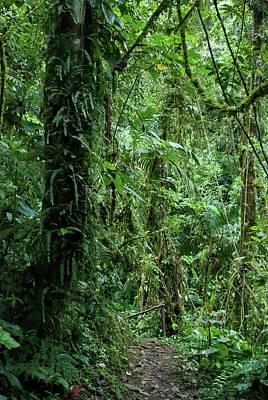 Photograph - Ecuador Cloud Forest by Cascade Colors