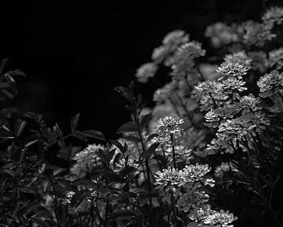 Photograph - Edelweiss by Brooke T Ryan