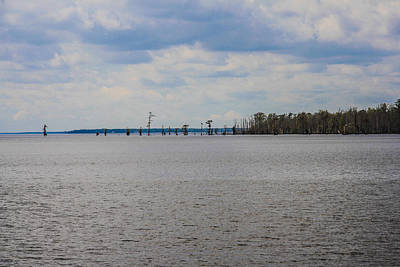 Sheep - Edenton Bay 2 by Andrew Nelson