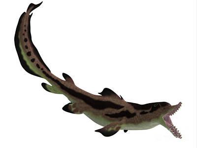Edestus Shark Open Mouth Art Print by Corey Ford