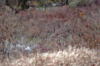 Photograph - Edge Of A Pond by Gina O'Brien