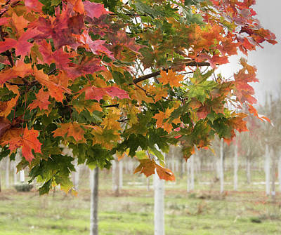 Photograph - Edge Of Fall by Jean Noren