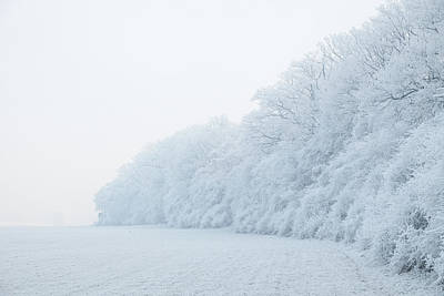 Photograph - Edge Of Forest In Hoar Frost,foggy Morning Light by Martin Stankewitz