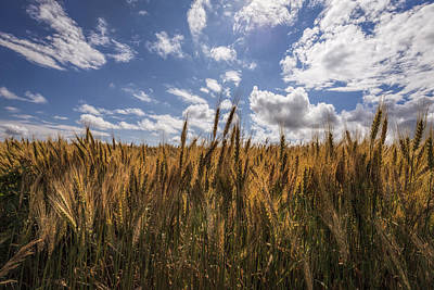 Photograph - Edge Of The Field by Scott Bean