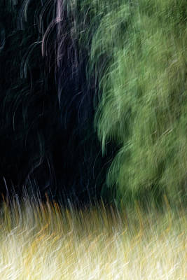 Photograph - Edge Of The Forest by Deborah Hughes