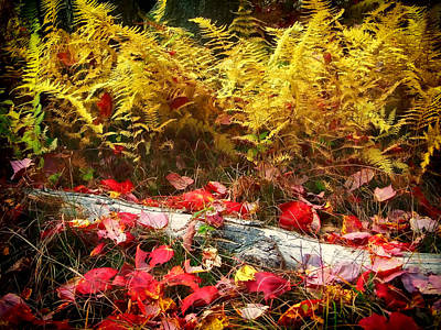 Photograph - Edge Of The Forest In Fall by Carolyn Derstine