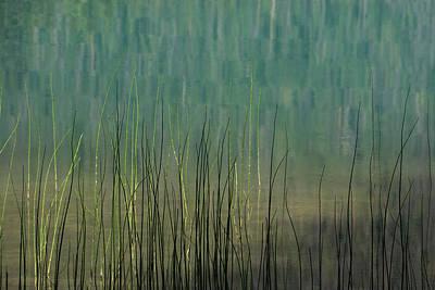 Photograph - Edge Of The Lake - 365-262 by Inge Riis McDonald