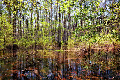 Photograph - Edge Of The Swamp 2 by Susan Rissi Tregoning