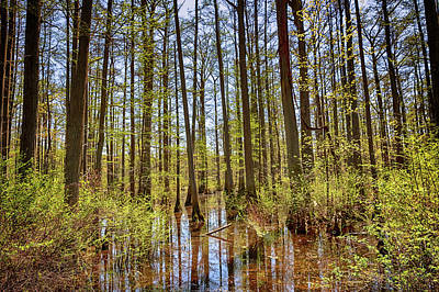 Photograph - Edge Of The Swamp by Susan Rissi Tregoning