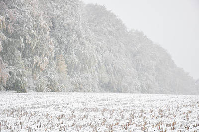 Photograph - Edge Of The Wood Autumn Leaves In Early Snow by Martin Stankewitz