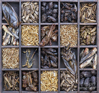 Human Worms Photograph - Edible Insects by Tim Gainey
