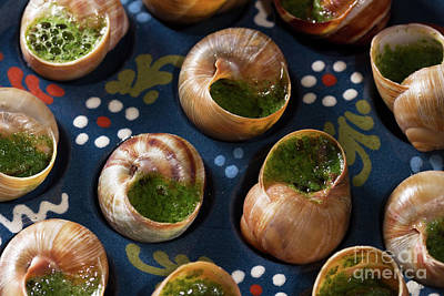 Photograph - Edible Snails by Anastasy Yarmolovich