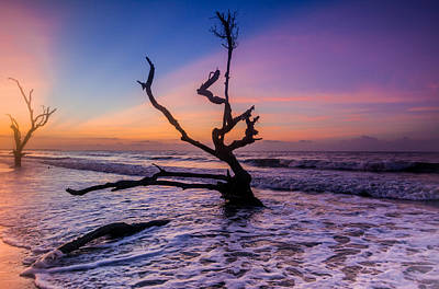 Edisto Dawan Art Print by RC Pics