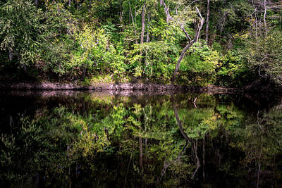 Photograph - Edisto River by Serge Skiba