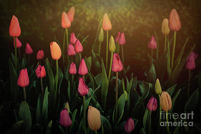 Photograph - Morning Tulips by Lynn Sprowl