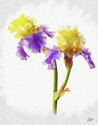 Digital Art - Edith Wollford Bearded Iris Faux Pastel by Endre Balogh