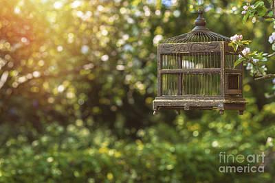 Birdcage Photograph - Edwardian Birdcage by Amanda Elwell