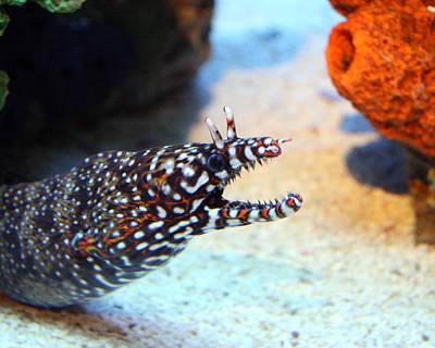 Photograph - Eel by George Jones