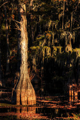 Photograph - Eerie Bayou by Ester Rogers