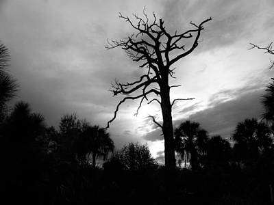 Tree Photograph - Eerie Evening by Ric Schafer