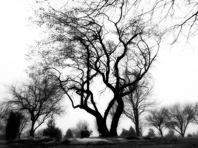 Photograph - Eerie Trees by Kyle West