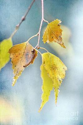 Autumn Leaf Photograph - Effeuillantine - 14ct11a by Variance Collections