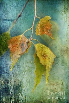 Autumn Leaf Photograph - Effeuillantine - 15t12 by Variance Collections