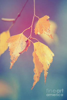 Autumn Leaf Digital Art - Effeuillantine - 17a by Variance Collections