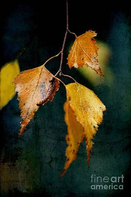 Autumn Leaf Photograph - Effeuillantine - 29t3 by Variance Collections