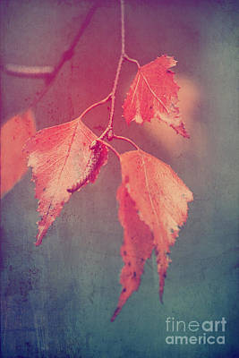 Brown Leaf Photograph - Effeuillantine - 46 by Variance Collections