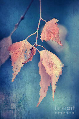 Brown Leaves Photograph - Effeuillantine -47t3 by Variance Collections