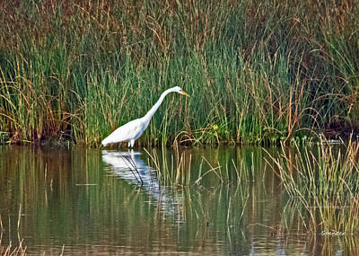 Photograph - Egret In Wait by T Guy Spencer