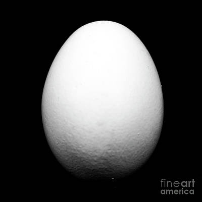 Photograph - Egg by John Rizzuto