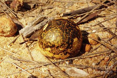 Photograph - Egg Mushroom Ball by Cassandra Buckley