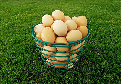 Photograph - Eggs In A Basket by Harold Zimmer